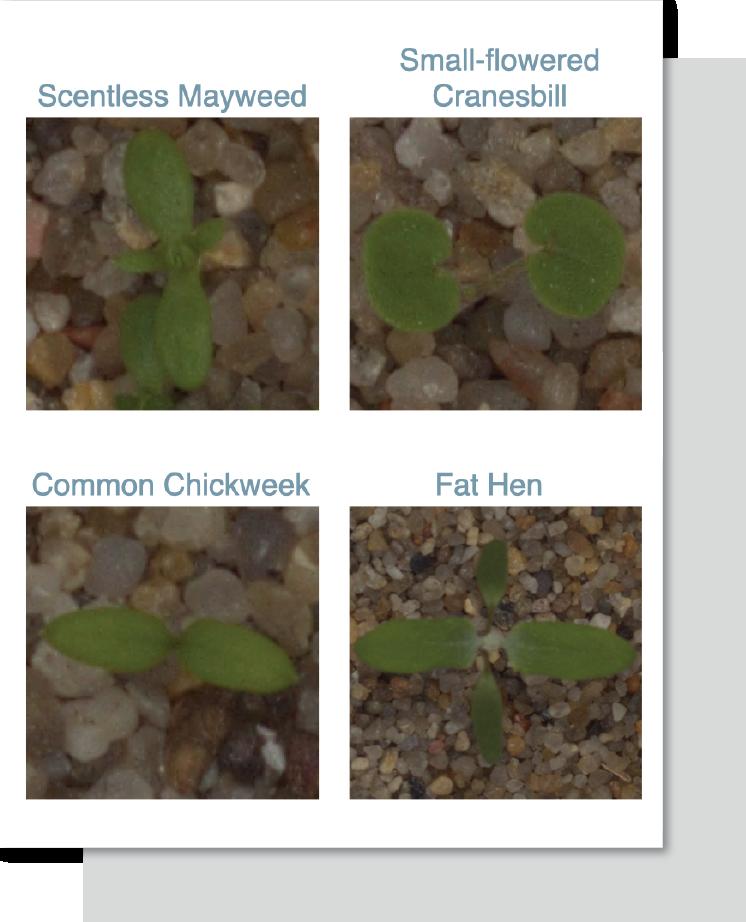 CTA_MLH-image-classification